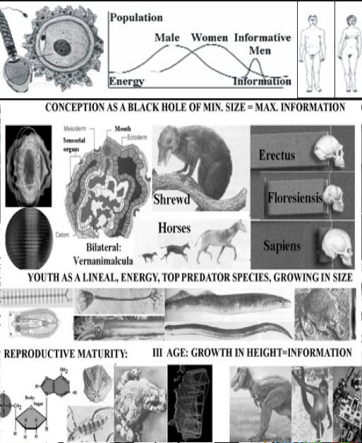 evolution&gender