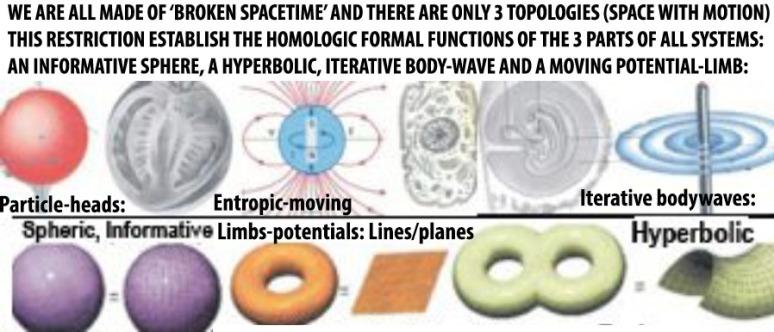3 topologies: bodywaves