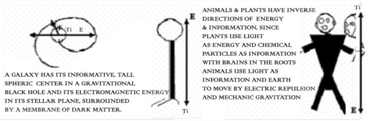 Animals jpg